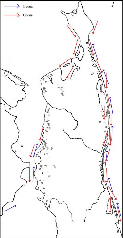 Основные направление сезонных миграций хохлатой и морской чернетей на Северном Сахалине