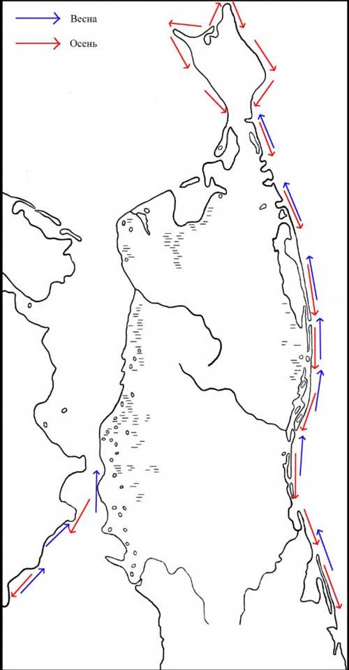 Направление сезонных перемещений каменушек наСеверном Сахалине