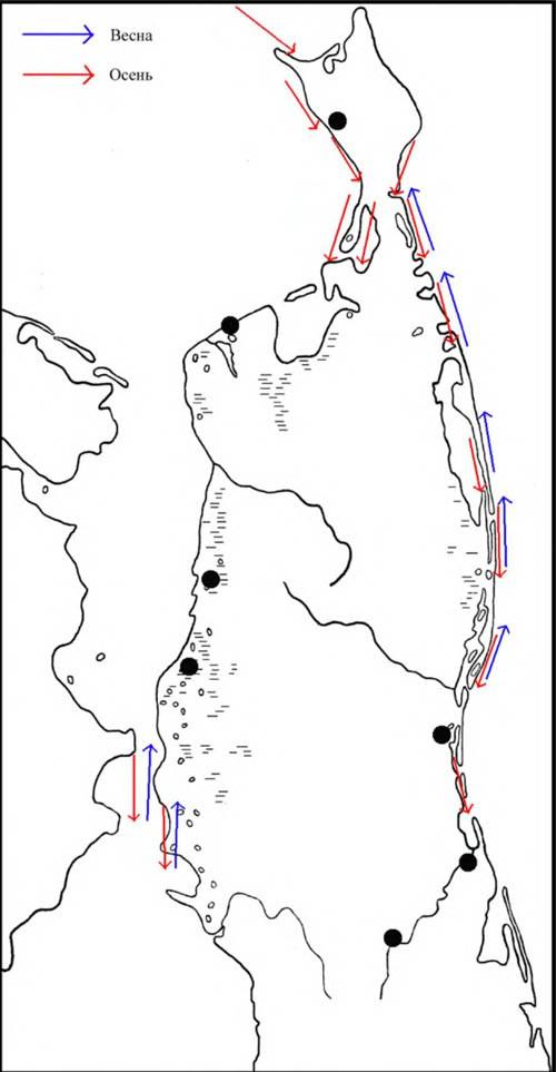 Места находок гнёзд ивыводков перевозчиков, атакже направления перемещений впериод сезонных миграций наСеверном Сахалине