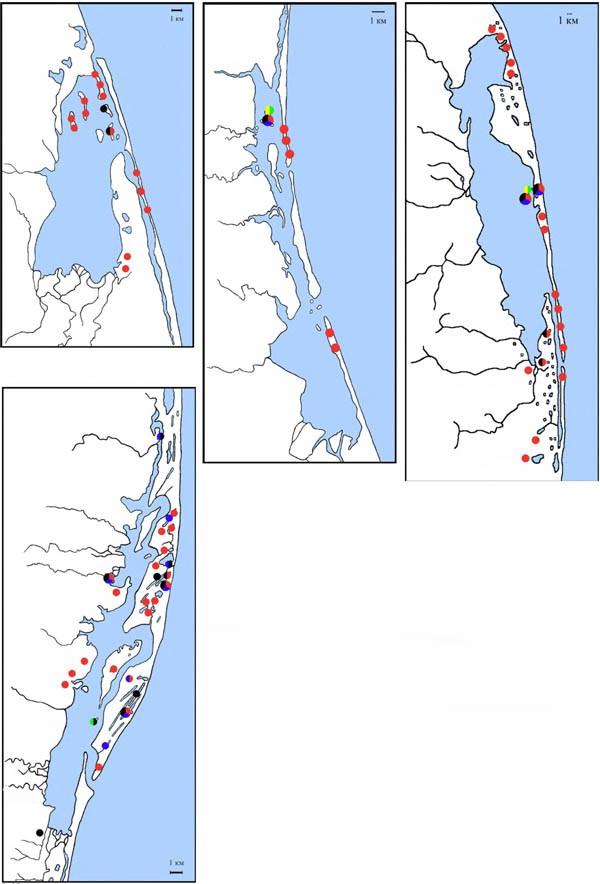 Карта-схема расположения колоний лайковых назаливах Набильский, Ныйский, Чайво, Пильтун. Красный цвет— камчатская крачка, чёрный— речная крачка, синий— озёрная чайка, жёлтый -тихоокеанская чайка, зелёный— чёрнохвостая чайка