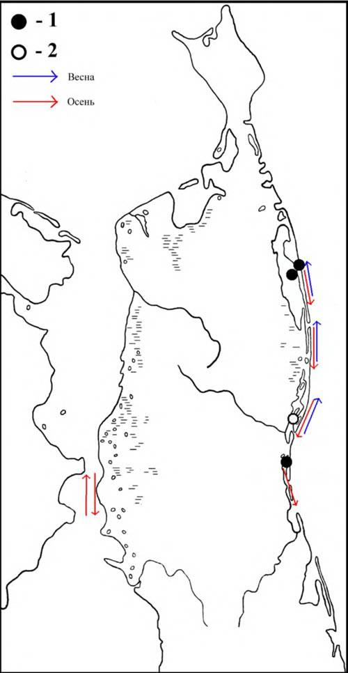 Места расположения колоний чернохвостой чайки наСеверном Сахалине инаправления еёперемещений впериод сезонных миграций