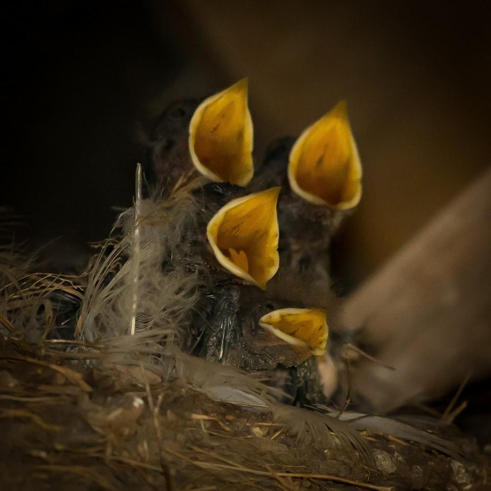 Птенцы вгнезде