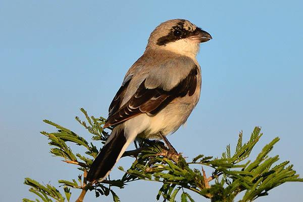 http://www.ebirds.ru/images/e/281.jpg