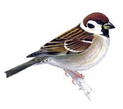 http://www.ebirds.ru/images/first/268.jpg