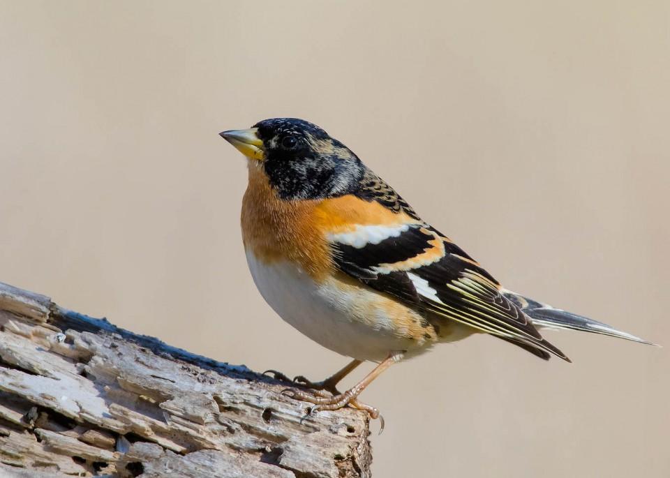 картинки юрка птицы список